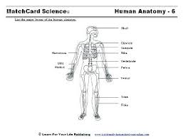 Body Systems Diagram Worksheets The Best Image Collection Info Major