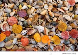 Top View Of Colorful Seashell Collection For Background Purposes