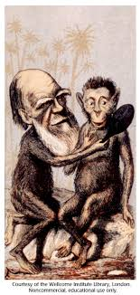 Gallery 12: Charles Darwin caricature :: DNA Learning Center