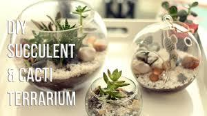 how to make succulents cacti terrarium diy cÓmo hacer un terrario you
