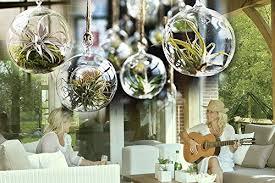 4 pack of 6 hanging glass terrariums air plant globe handmade create