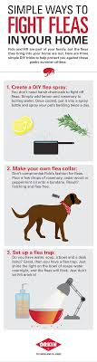 orkin flea treatment cost. Unique Flea 3 Simple Ways To Fight Fleas DIY Throughout Orkin Flea Treatment Cost