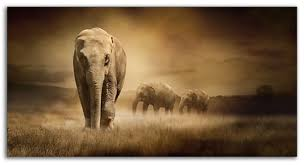 on african elephant canvas wall art with large elephants sepia wall art 103 x 52 cm canvas wall art picture