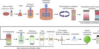 Biopharmaceuticals From Microorganisms From Production To