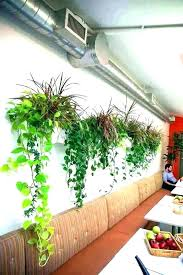 wall mounted plants wall mounted planters wall mounted planters wall mounted planters wall mounted planters an
