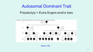 Polydactyly Pedigree Chart Genetics Formal Grade Polydactyly By Savannah Schuchmann On