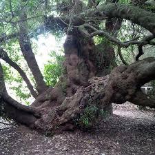 office tree. post office tree t