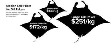 Shark Savers Stopping The Gill Raker Trade