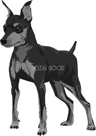 ミニチュアピンシャーの白黒モノクロでかっこいい犬の無料イラスト