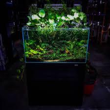 Kessil Aquarium Light
