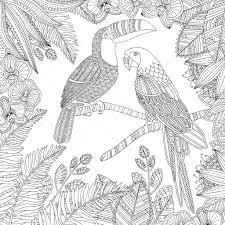 ベクトル手描きオオハシ鳥アラはオウム熱帯大人の塗り絵イラストです