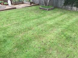 i then overseeded and top dressed the lawn and continued to water the last after picture was taken just over a couple of weeks later on the 16th of june