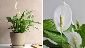 Добре е да ги познавате, когато купувате цвете за дома си или по. 7 Stajni Rasteniya Koito Sa Polezni Za Vasheto Zdrave Chast 1 Idei Bg