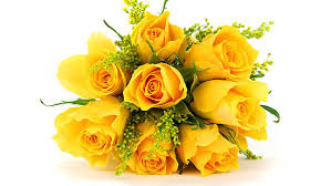 significance of rose flowers by their color