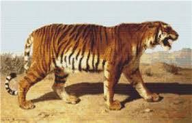 Tiger Color Chart Stalking Tiger
