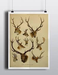 Antique Deer Elk Antlers Scientific Chart Poster Print Deer