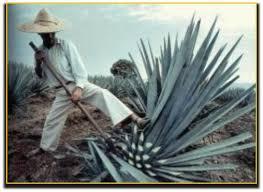Resultado de imagen para imagen dde muchas marcas de tequila