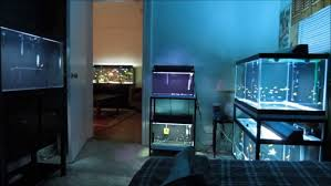 Superior Bedroom:Fish Room Tour Excellent Tank In Bedroom Luck Idea Ideas Is It Good  To