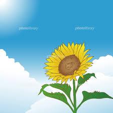 青空とひまわりの花 夏のイメージ イラスト素材 5550798 フォト