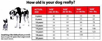 Dog Years Vs Human Years