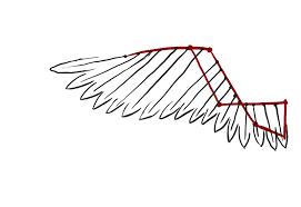 wing sketch