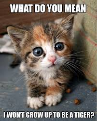 cute kittens and puppies quotes. Simple Kittens What Do You Mean I Wonu0027t Grow Up To Be A Tiger Picture With Cute Kittens And Puppies Quotes