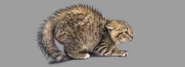 Jak odstraszyć koty? Skuteczne odstraszanie kotów.