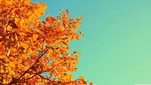 HD Wallpaper Orange Aesthetic