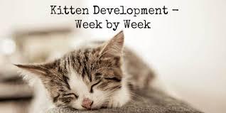 Burmese Kitten Weight Chart Kitten Development Week By Week Weeks 1 To 8 Cat World