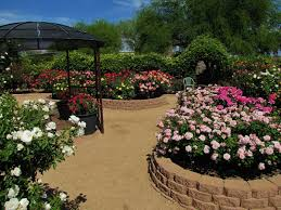 Small Picture Rose Garden With Colorful Roses And Natural Fences Stunning Rose