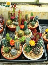 Small Picture Cactus gardens Pinteres