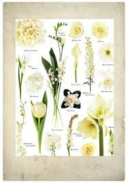 pin by enged weddings on wedding flower names