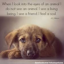 Pet Quotes Adorable 48 Inspiring Quotes About Animals Man's Best Friend Pinterest