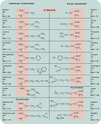 Amino Acid Chart Fascinating The Twenty Amino Acids Grouped According To The Character Of Their