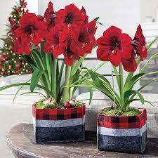 Garden Design Degree Decor Impressive Ideas