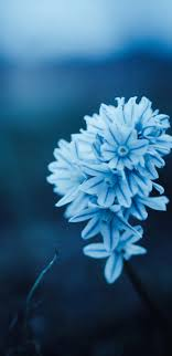 1440x2960 Blue Petal Flowers Samsung ...