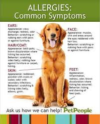 Pet Allergies | PetPeople
