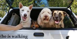 We offer superior dog boarding, dog training, and dog daycare at four convenient st. Dog Daycare Dogs Crossing Canine Training And Pet Services