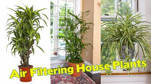 best indoor plants for office. Marvelous Best Air Filtering House Plants According To Nasa Pict Of That Clean Indoor Style And For Office