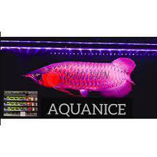 Đèn LED Aqua Nice X2 Tanning Pro Light đỏ cá không đỏ nước 2 hàng bóng của  Malaysia 85cm - 145cm