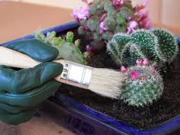 Small Picture Create an Indoor Desert Garden HGTV