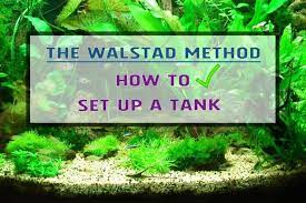 tank using the walstad method