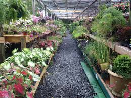 southern styles nursery garden center