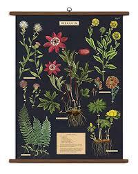 Amazon Com Cavallini Vintage School Chart Herbarium