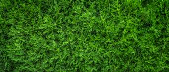 wild grass texture. Nature Grass Plant Wood Lawn Texture Leaf Flower Moss Wild Pattern Green  Desktop Soil Plants Background