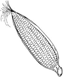 Ear Of Corn Coloring Page Pages Cob On Template Sketch Ideas 5 Kids