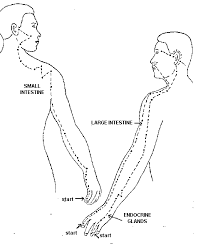 meridian therapy Meridian Lines Body Map Meridian Lines Body Map #48 meridian lines body map