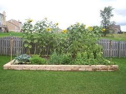 Small Picture Best Vegetable Garden Bed Ideas Images Home Decorating Ideas