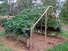 Building A Grape Arbor In Your Garden: How To Build A Grape Trellis