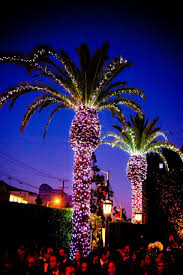 Lighted Christmas Palm Tree Palm Trees Light Up The Night At Cecconis West Hollywood